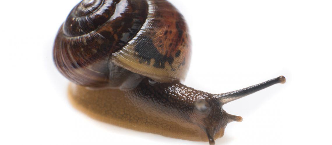 Snail | Photography Case Studies